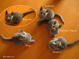 Vogue-kittens2