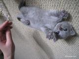 vogue-kitten2011-10-1