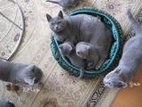 ekika-kitten-2011-9-3