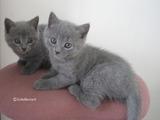 theressa-kitten2011-9-5