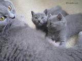 theressa-kitten2011-9-13