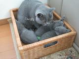 ekika&theressa-kitten-2011-9-2