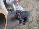 theressa-kitten2011-10-1