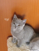 Gigi1