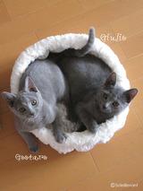 Erika kittens1