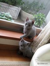 ekika-kitten-2011-1