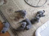 ekika&theressa-kitten-2011-10-2