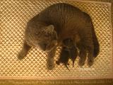 theressa-kitten2011-8-2