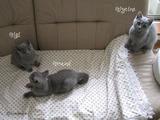 teressa-kittens1