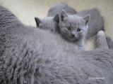 theressa-kitten2011-9-10