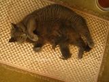 theressa-kitten2011-8-4
