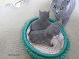 theressa-kitten2011-9-12