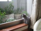 ekika-kitten-2011-10-3
