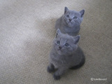 theressa-kitten2011-9-9