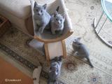 ekika&theressa-kitten-2011-10-1