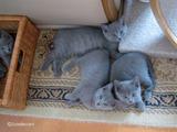 ekika-kitten-2011-4