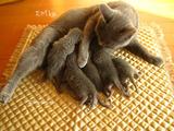 ekika-kitten-2011-8-8