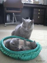 theressa-kitten2011-9-11