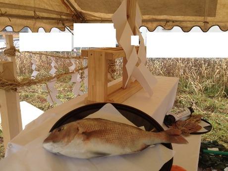 立派なタイ♫今日はメデタイのであります地鎮祭滝川神社