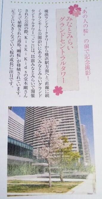 剛桜チラシ