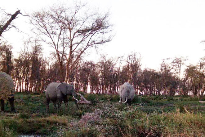 【ケニア】アンボセリ国立公園ガイドの仕事中に撮影した動物とかの写真集 / マサイ通信:第199回
