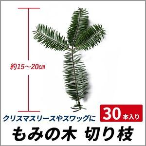 もみの木 切り枝 約15~20cm 30本入り