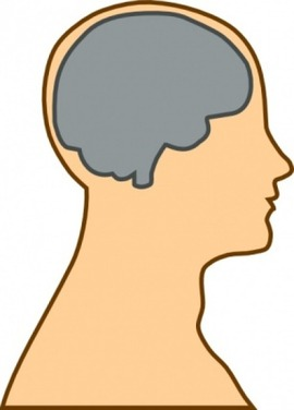 medical-diagram-of-brain-clip-art_432758