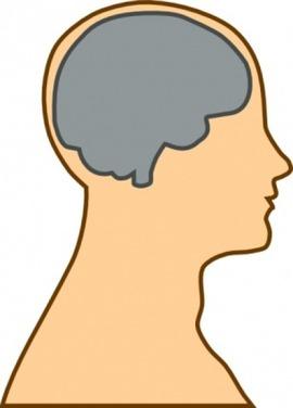 medical-diagram-of-brain-clip-art_432758