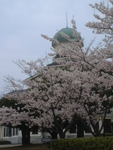 桜と龍翔館