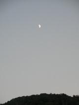 半月(月齢8.8)