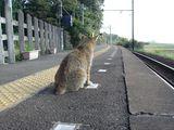 拾い画像(猫タン)