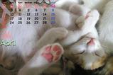 猫のカレンダー2006.04