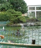 大阪天王寺動物園で