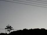 裏山の木(朝6時54分)