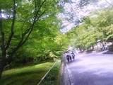 金閣寺辺りの木漏れ日