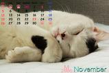 猫のカレンダー2006.11
