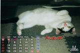 猫カレンダー2006.08