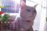 猫のカレンダー2006.06