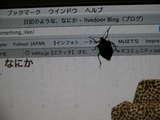 こんな真冬にカメムシが…08.01.12