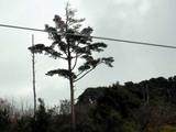 裏山の木(´Α`)