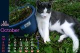 猫のカレンダー2006.10