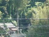 電線にとまって鳴いている野鳥