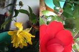 生けてあった花