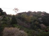 裏山(向こう側)
