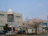 「アクティブハウス越前」と桜