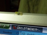 遊びに来た虫