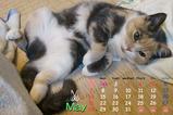 猫カレンダー2006.05