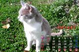 猫カレンダー2006.01