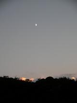 月齢8,2上弦の月