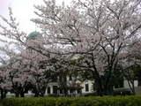 桜とみくに龍翔館